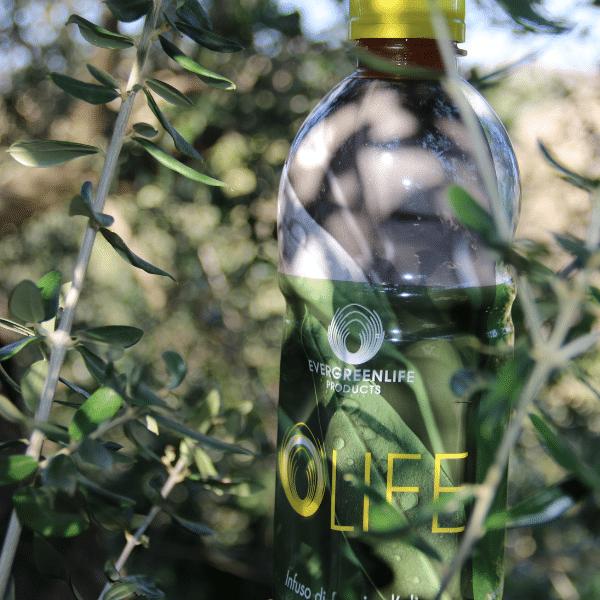 olife tiroide infuso foglie