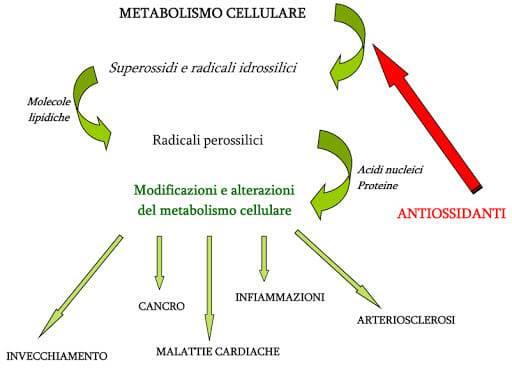 polifenoli delle foglie di olivo